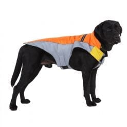 Orange & Grey Coat - pawsandtails.pet