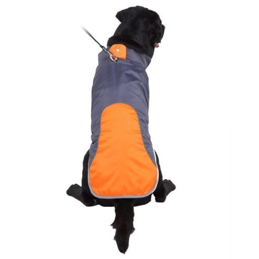 Orange & Dark Grey Coat - pawsandtails.pet
